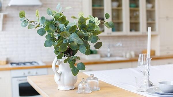 COLUMN10: みずみずしいグリーンを部屋の中で簡単に楽しむ